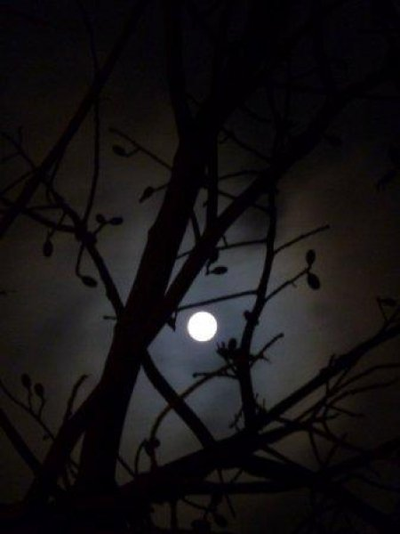 The photograph is of a full moon shining brightly, seen through the branches of a nearly bare tree in the night sky. It occupies the centre of the frame with the broad and thinner branches of the tree forming a mesh across the sky. But none cross the image of the moon, which lies intact within an irregular pentagon formed by the branches. The thinner branches growing off the main ones have scanty leaves on them. Even though the sides of the picture have a black tinge, the light of the moon illuminates the centre of the photograph creating a serene environment. Photo credit: Vahista Dastoor